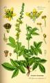 Agrimony Herb Bulk