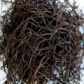 Arame Seaweed Sun-Dried Organic Bulk