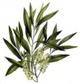 Tea Tree Essential Oil Bulk